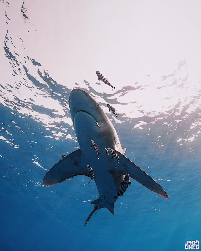 underwater photography world in Egypt - Taimour Othman